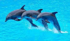 Els dofins fem..