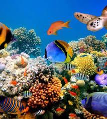 Visita de la Dra. Adriana Vergés, biòloga marina
