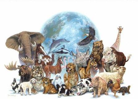 """Projecte """"Animals en perill d'extinció"""""""