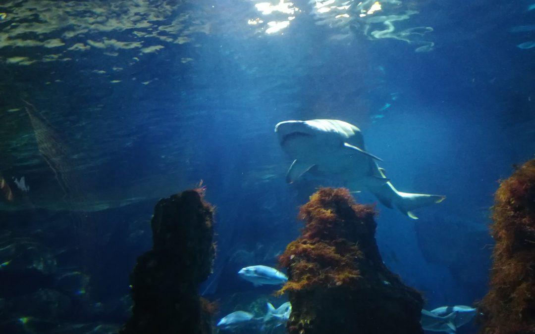 Visita a l'Aquàrium