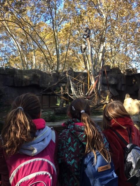 Visita al zoo